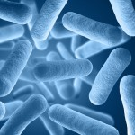Researchers Discover How Persistent Bacteria Can Withstand Antibiotics